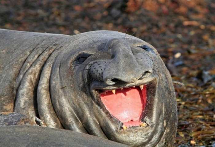 """""""Chết ngất"""" với những nụ cười """"siêu hài hước"""" của thú cưng"""
