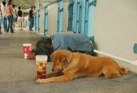 Câu truyện ý nghĩa về người ăn mày và chú chó