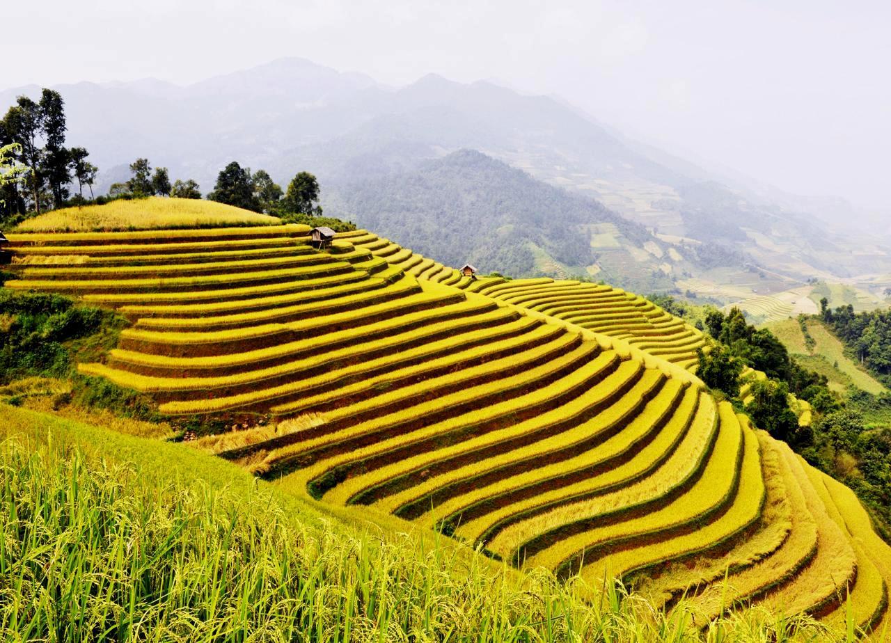Ruộng bậc thang Hoàng Su Phì - GSV Travel