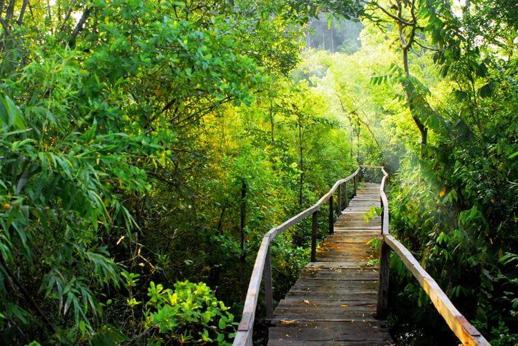 Khám phá vẻ lung linh của vườn quốc gia Cát Tiên