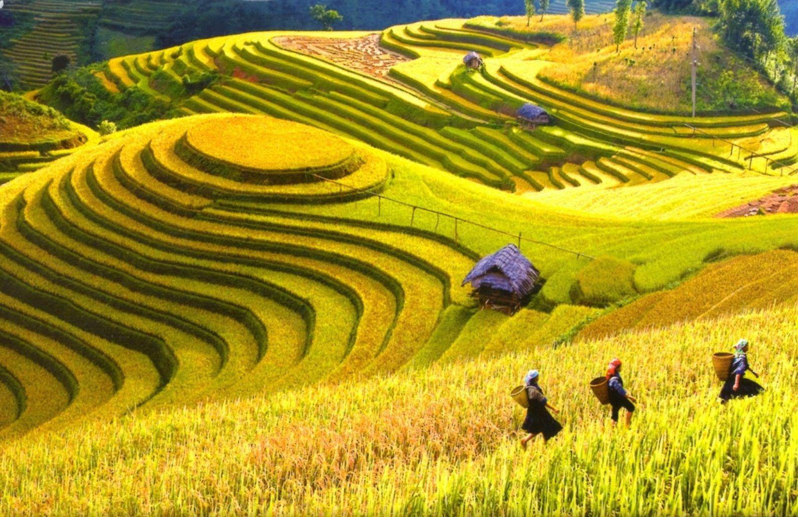 Ruộng bậc thang – Sáng tạo vĩ đại của các dân tộc vùng cao Hà Giang